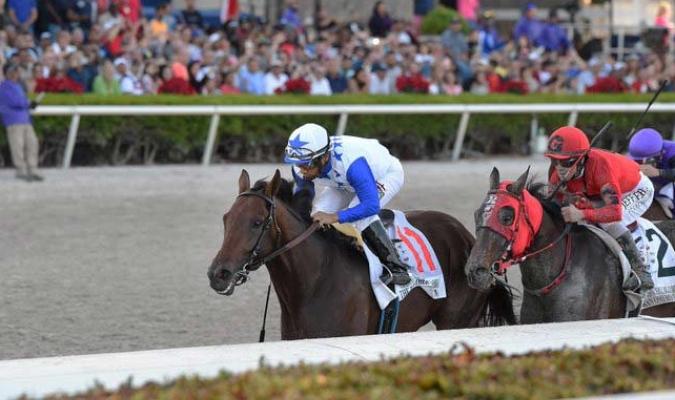 Brother Slew es un caballo venezolano / Foto: Cortesía